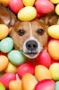 Easter 2021 Closure Dates